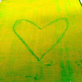ACCORD, une école verte (6)-001